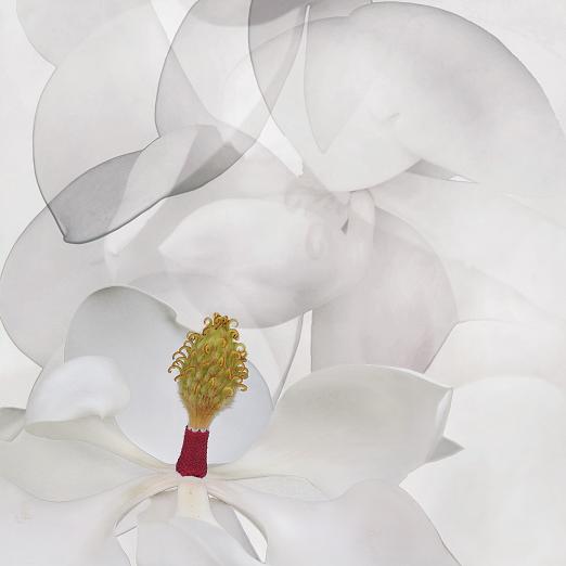 Magnolia, Mike Carmichael, Photograph - Giclee print (Hahnemuhle Photo Rag), $200