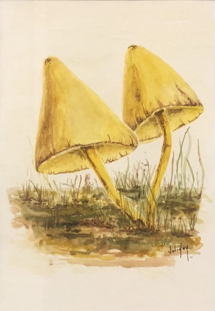 Yellow Entoloma, Juli Day, Watercolor on Paper, $125