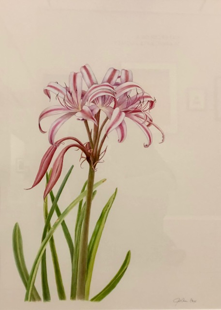 Milk and Wine Lily, JoAnn Cox, Acrylic on Paper, $1,200