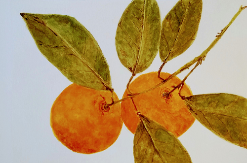 Satsumas, Juli Day, Watercolor on paper, $125