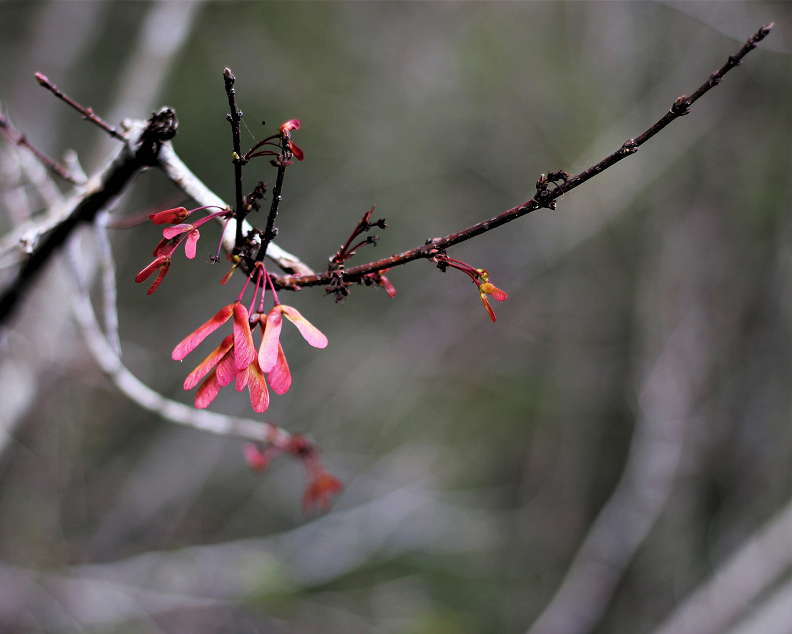 Early Spring, Nikki Shaw, Photograph, $125
