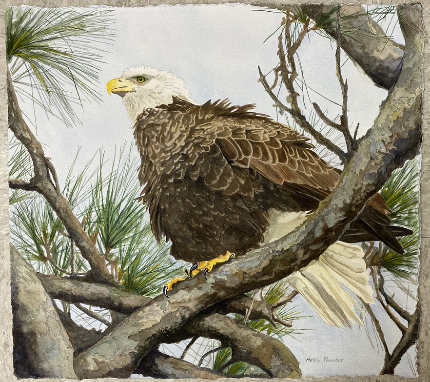 REagle, Helen Thurber, Watercolor, NFS