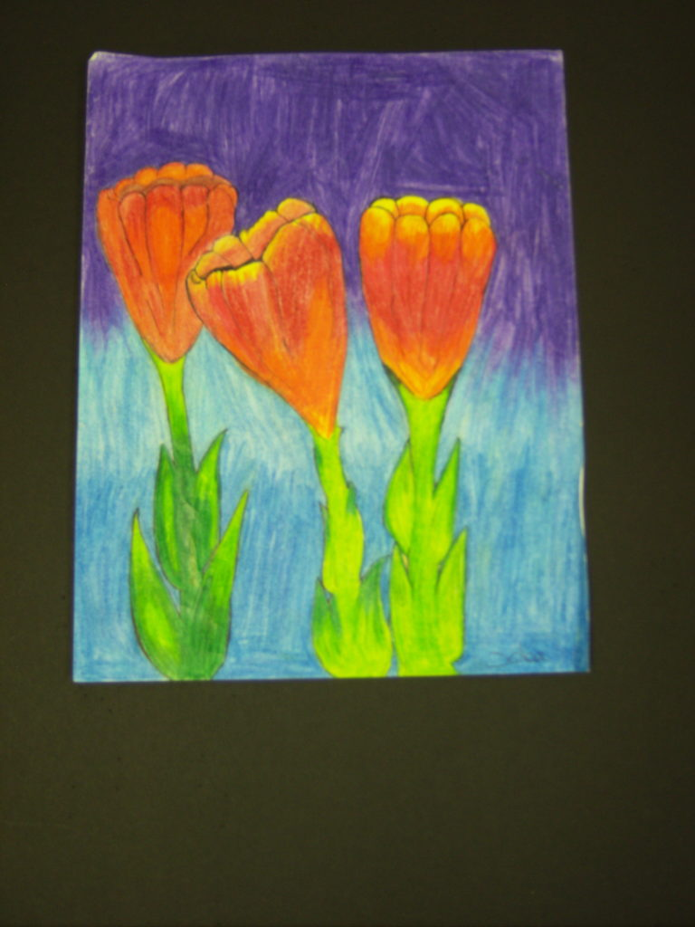 Tulips, Aubrie Norfus, 7th Grade, Burns Middle School, Drawing, Colored Pencils