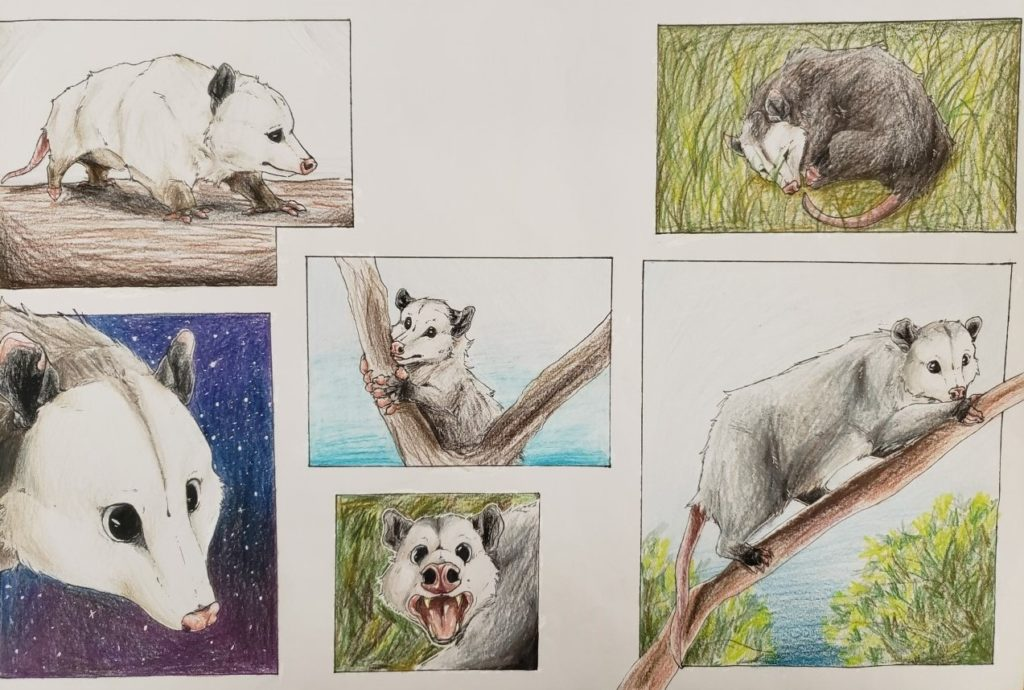 Opossum, Claudia Mann, 10th Grade, Bryant High School, Drawing, Colored Pencil and Pen