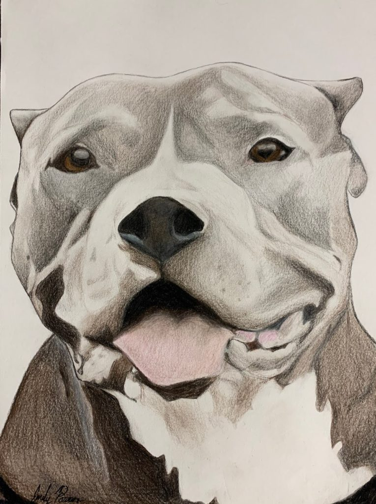 Pit Bull, Emily Powers, 10th Grade, Elberta High School, Drawing, Colored Pencil