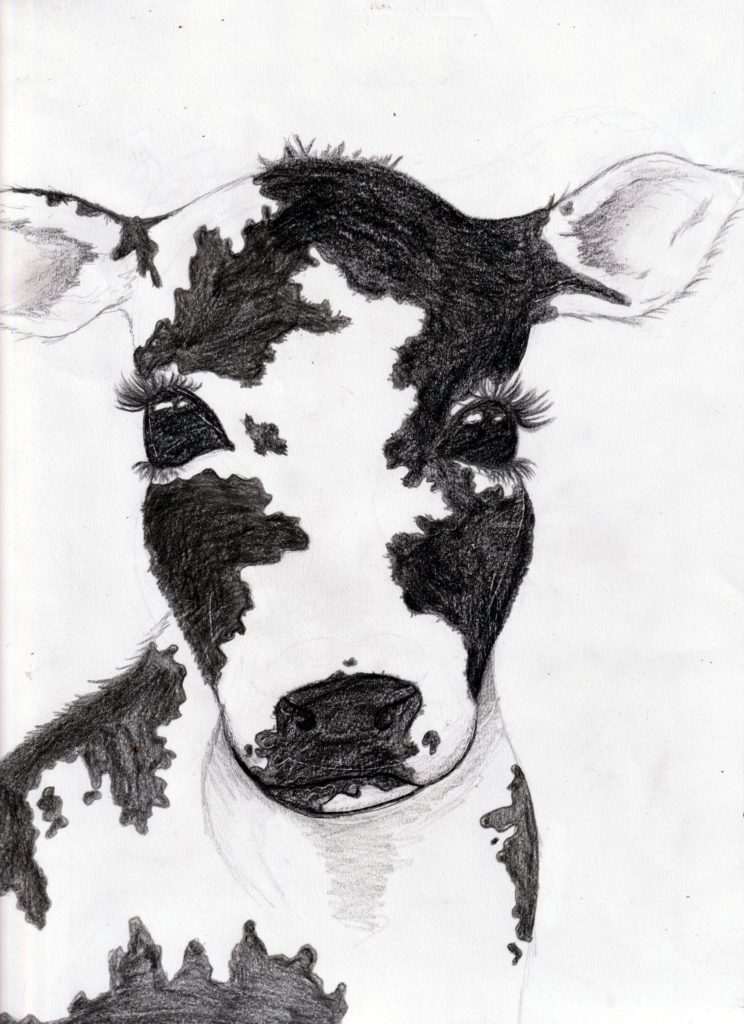 Cow, Lexi Bagley, 8th Grade, Daphne Middle School, Drawing, Color Pencils