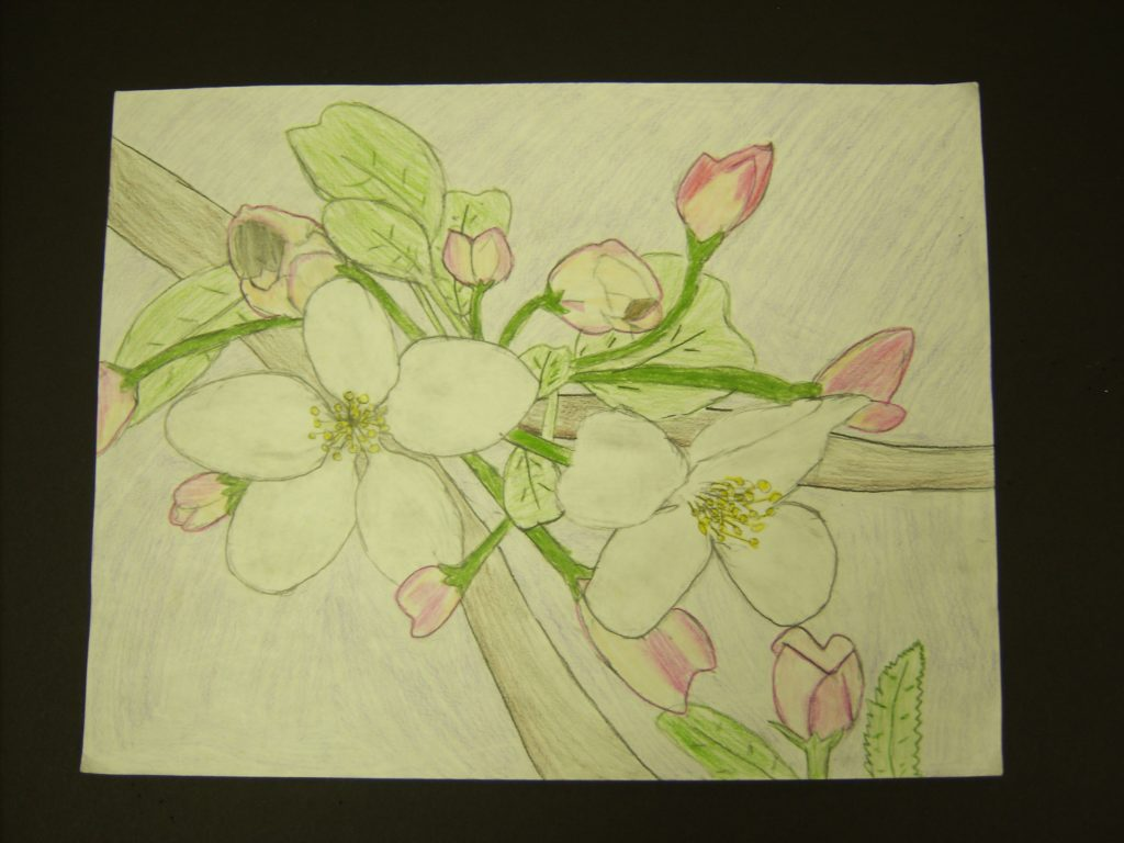 Crab Blossom Flower, Maliyah Roberts, 7th Grade, Cranford Burns Middle School, Color Pencils