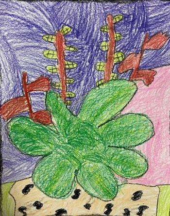 Succulent Study, Grace Swan, Crayon on Paper