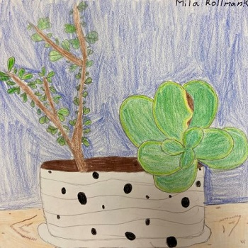 Succulents in Pot, Mila Rollman, Colored Pencil