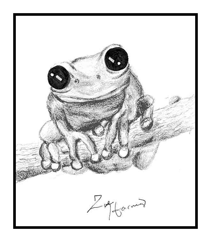 Me Likes Frog, Zoe Harvey, Covenant Christian School, Drawing, Graphite Pencil